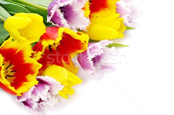 Tulipani bouquet fresche bianco Pasqua primavera Foto d'archivio © Pakhnyushchyy