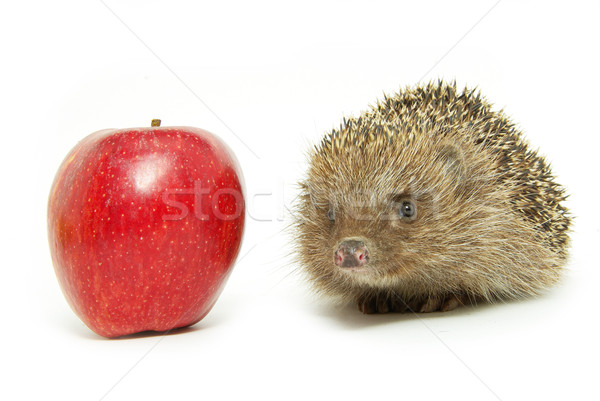apple and hedgehog  Stock photo © Pakhnyushchyy