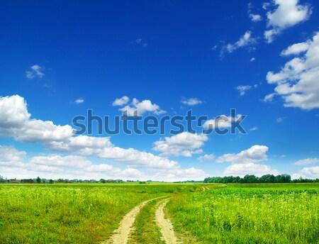 Campo cielo blu primavera erba natura prato Foto d'archivio © Pakhnyushchyy