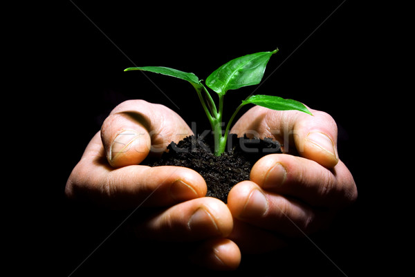 Hands holding plant Stock photo © Pakhnyushchyy