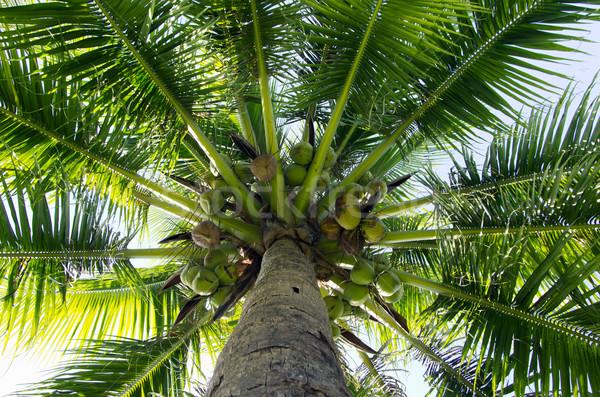 Hurma ağacı yeşil mavi gökyüzü ağaç deniz yaprak Stok fotoğraf © Pakhnyushchyy