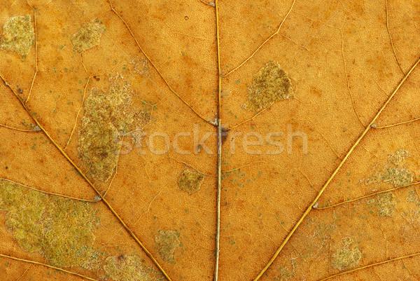structure of leaf Stock photo © Pakhnyushchyy