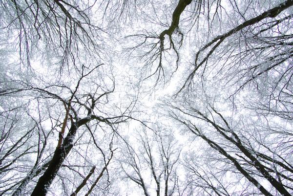 Forêt congelés hiver arbre ciel résumé Photo stock © Pakhnyushchyy