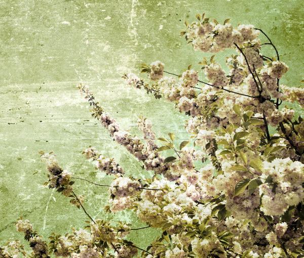 grunge  cherry flowers     Stock photo © Pakhnyushchyy