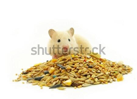 хомяк белый портрет смешные ПЭТ Cute Сток-фото © Pakhnyushchyy