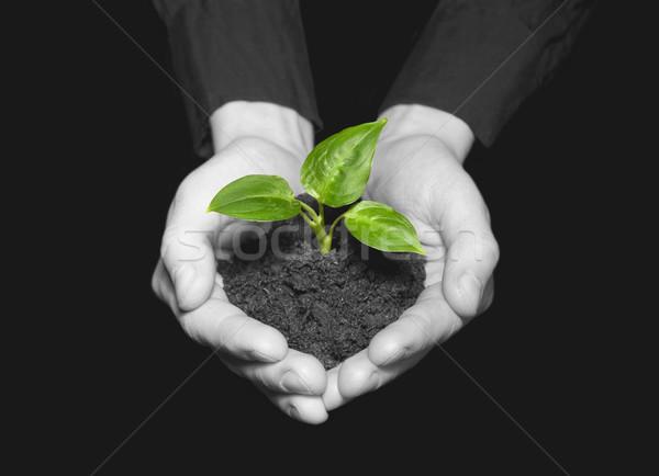 Manos árbol joven suelo mano Foto stock © Pakhnyushchyy