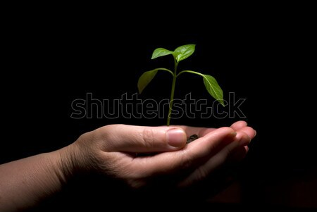 little  plant Stock photo © Pakhnyushchyy