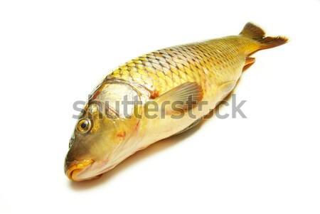 карп изолированный белый рыбы обеда пластина Сток-фото © Pakhnyushchyy