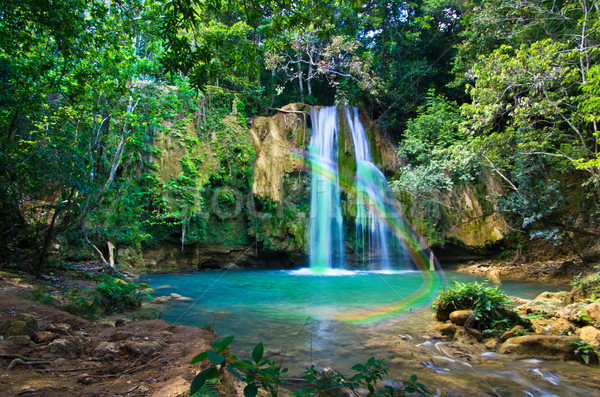 Wodospad głęboko zielone lasu wiosną liści Zdjęcia stock © Pakhnyushchyy