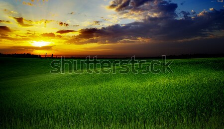 field with grass Stock photo © Pakhnyushchyy