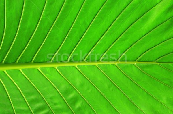 Blad textuur groen blad abstract natuur gezondheid Stockfoto © Pakhnyushchyy