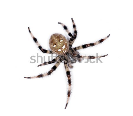 spider Stock photo © Pakhnyushchyy