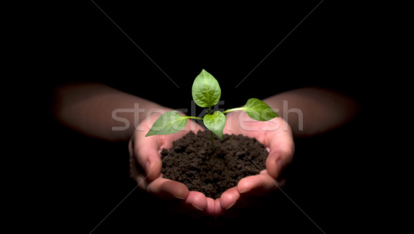 Stock photo: plant in hands