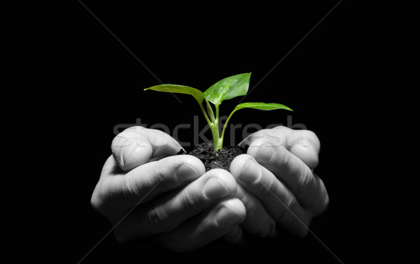 plant in hands Stock photo © Pakhnyushchyy