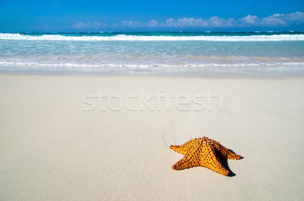 Foto d'archivio: Starfish · spiaggia · Caraibi · sabbia · bellezza · arancione