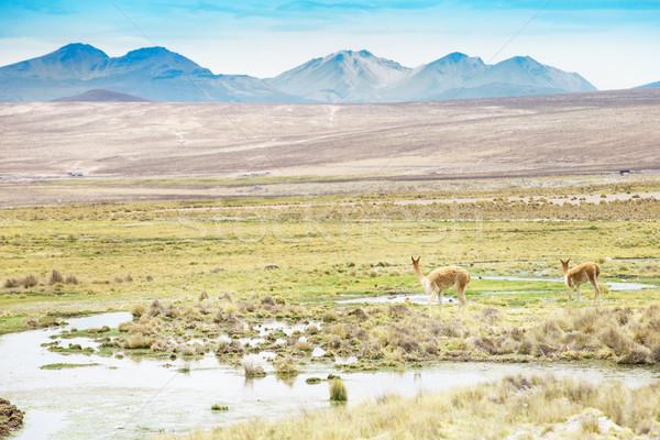 風景 山 馬 美しい アメリカ 谷 ストックフォト © Pakhnyushchyy
