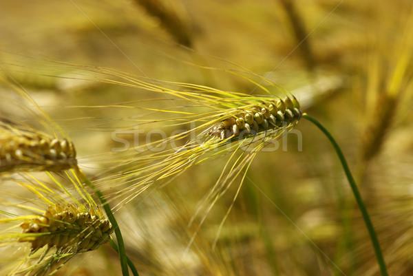 spike Stock photo © Pakhnyushchyy