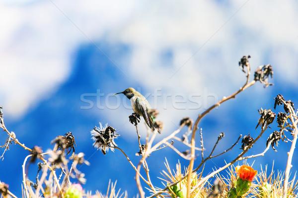 Beija-flor verde azul flores natureza pássaro Foto stock © Pakhnyushchyy