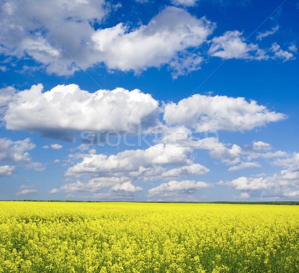 Viol domaine nuages ciel été vert Photo stock © Pakhnyushchyy