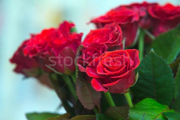 роз красивой букет красные розы цветы Сток-фото © Pakhnyushchyy