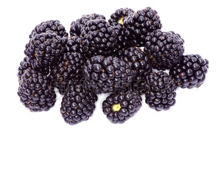 BlackBerry geïsoleerd witte vruchten gezondheid Blauw Stockfoto © Pakhnyushchyy