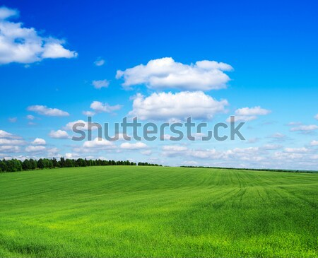 green field Stock fotó © Pakhnyushchyy