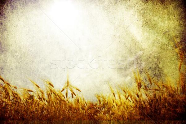 wheat Stock photo © Pakhnyushchyy