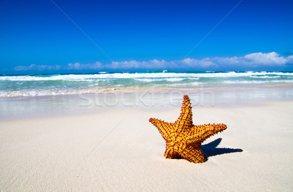Starfish oceano praia marinha céu nuvens Foto stock © Pakhnyushchyy
