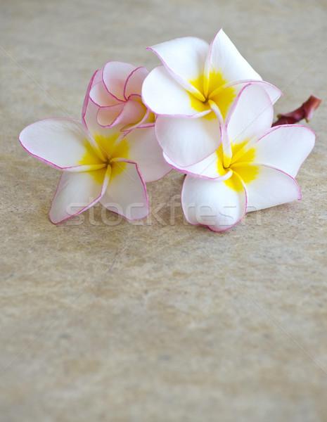 flowers frangipani  Stock photo © Pakhnyushchyy