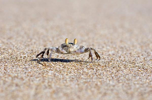 crab  Stock photo © Pakhnyushchyy