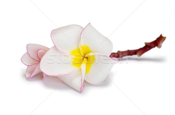 Flor diseno relajarse planta parque tarjeta Foto stock © Pakhnyushchyy