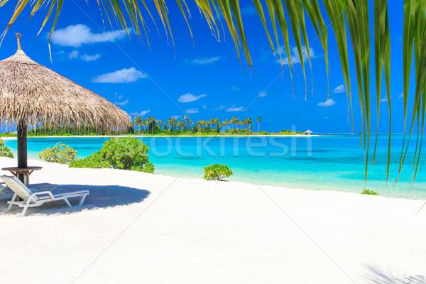 Tropikal plaj az palmiye ağaçları mavi plaj doğa Stok fotoğraf © Pakhnyushchyy