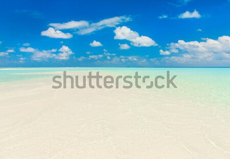 Tropikal plaj az palmiye ağaçları mavi gökyüzü doğa Stok fotoğraf © Pakhnyushchyy