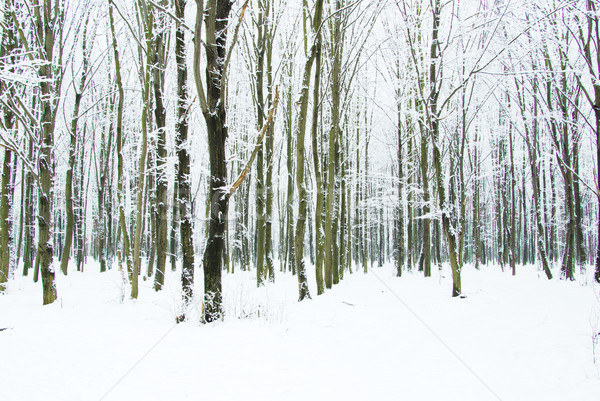 Kış orman güzel yol ağaç ışık Stok fotoğraf © Pakhnyushchyy