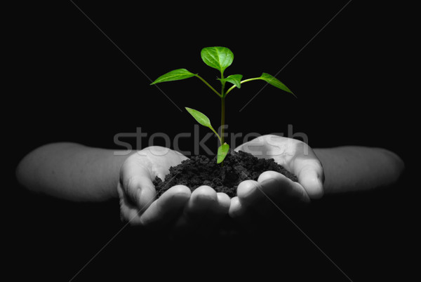 new life Stock photo © Pakhnyushchyy