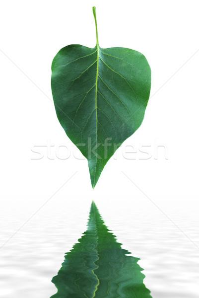 green leaf Stock photo © Pakhnyushchyy