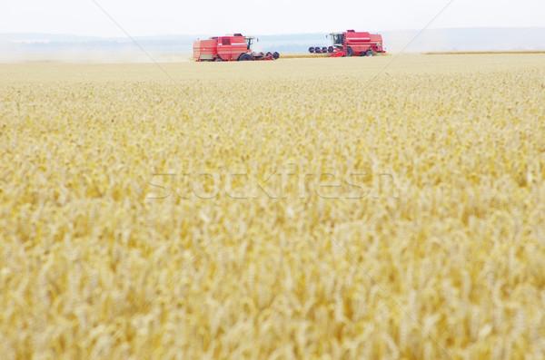 Campo de trigo alimentos medio ambiente crecimiento crecer nadie Foto stock © Pakhnyushchyy