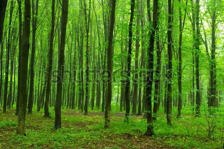 緑 森林 パス 自然 光 夏 ストックフォト © Pakhnyushchyy