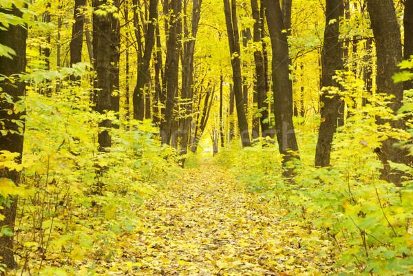 autumn forest  Stock photo © Pakhnyushchyy