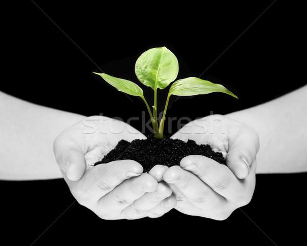 Stok fotoğraf: Bitki · eller · yalıtılmış · siyah · el · toprak