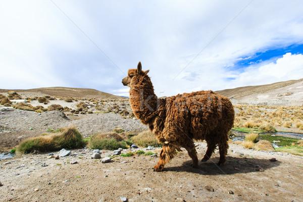 Hemel natuur landschap groep boerderij leven Stockfoto © Pakhnyushchyy