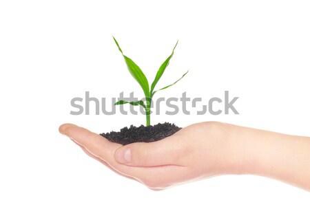 hand holding sapling  Stock photo © Pakhnyushchyy