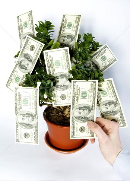 tree of money Stock photo © Pakhnyushchyy