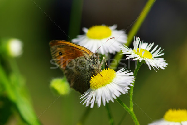 Schmetterling green leaf Natur Wissenschaft Leben fliegen Stock foto © Pakhnyushchyy