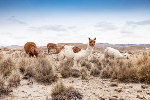 Arc természet tájkép hegy csoport portré Stock fotó © Pakhnyushchyy