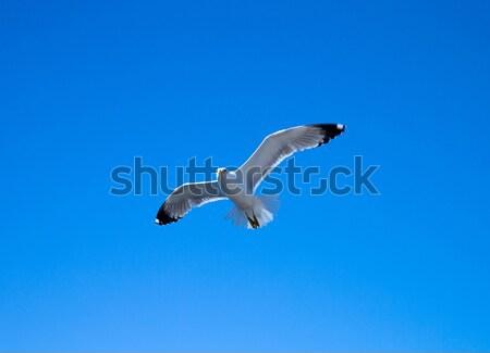 Sereg égbolt madarak napos idő nap fény Stock fotó © Pakhnyushchyy