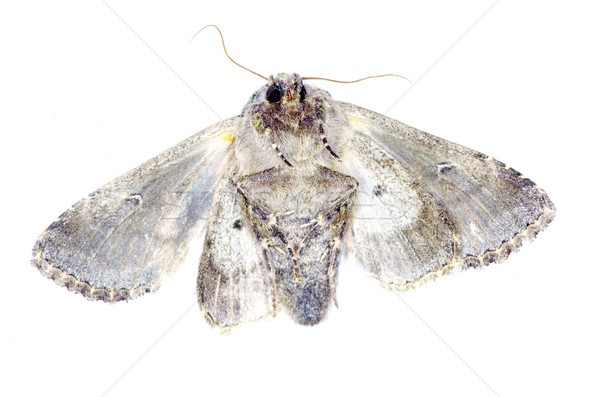 moth  Stock photo © Pakhnyushchyy