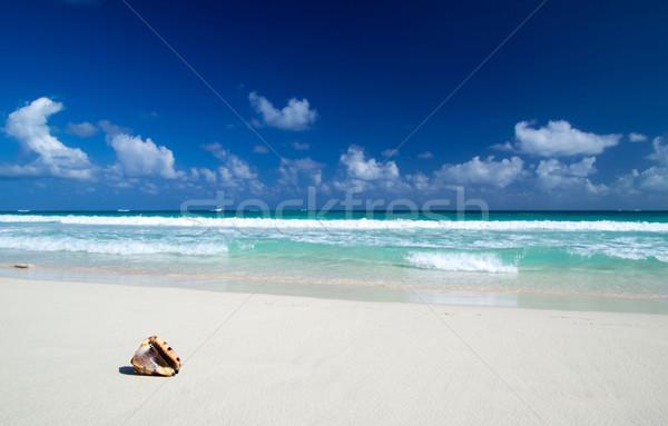caribbean beach Stock photo © Pakhnyushchyy