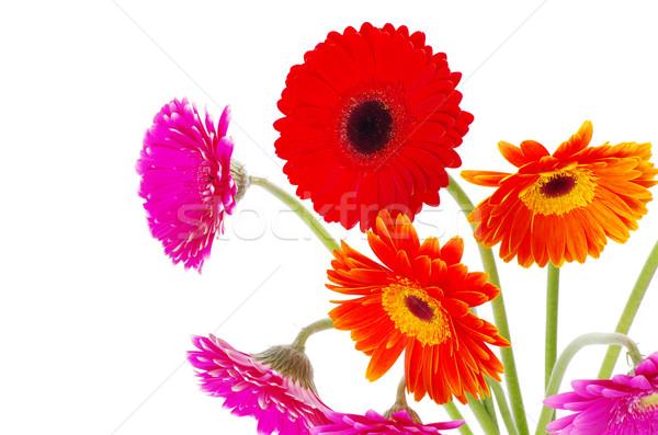 Colorido flores flor verano rojo planta Foto stock © Pakhnyushchyy