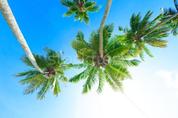 Palm tree on the sky Stock photo © Pakhnyushchyy